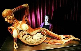ИЗДЕВАТЕЛЬСТВО НАД ТРУПАМИ УМЕРШИХ: нашумевшая по миру выставка «Тайны тела. Вселенная внутри» открылась в Москве. 'ГЛАС ПРАВОСЛАВНОГО НАРОДА' - ГАЗЕТА ДЛЯ ПРОСТЫХ ЛЮДЕЙ