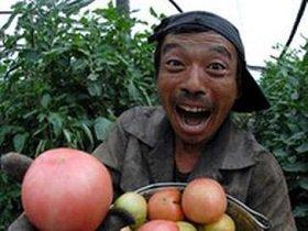 Китайский овощевод: «Скажите спасибо, что мы вас кормим». Но сами это не едим…