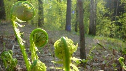 Растения на службе Пентагона: Зеленые насаждения способны стать опасным биооружием