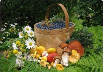 Чьи в бору грибы и ягоды? В Госдуме решили взять под строгий контроль сбор лесных даров Божиих гражданами России